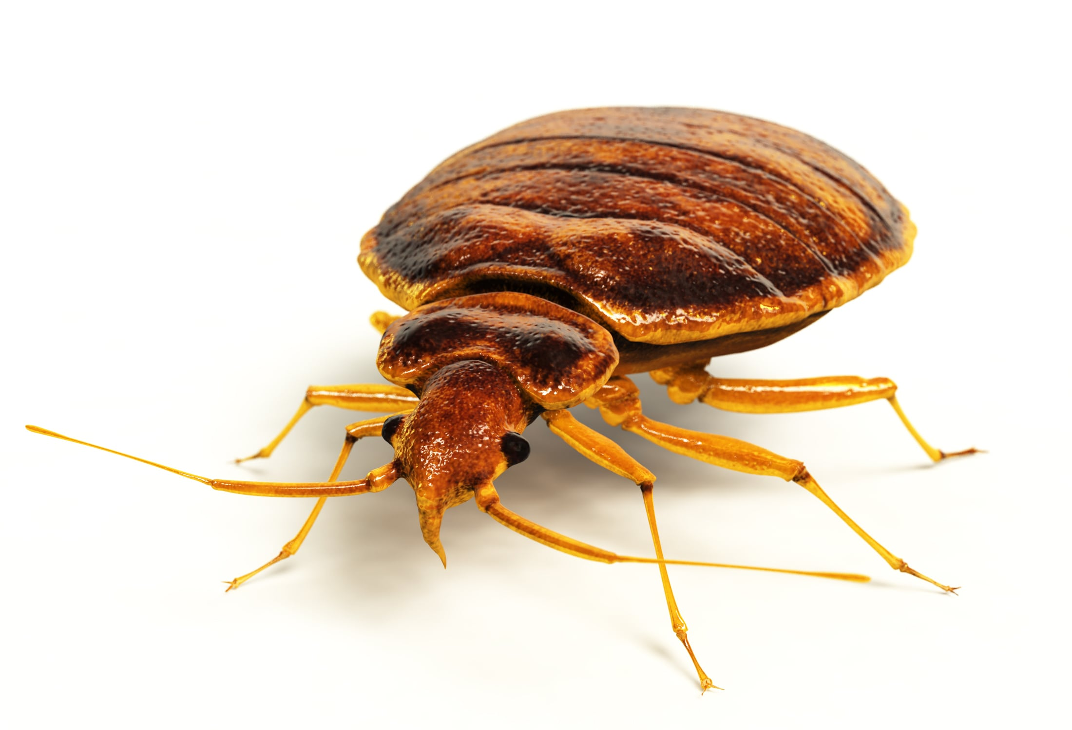 Houston Bed Bug Treatment Bed Bug Heat Treatment Holder S Pest